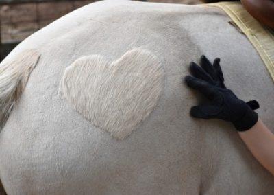 Georgia's Heart
