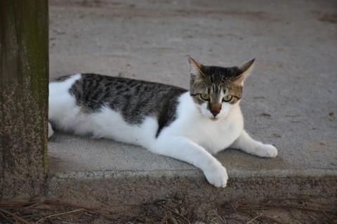 Sadie the Barn Cat