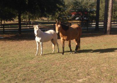 Two Happy Horses