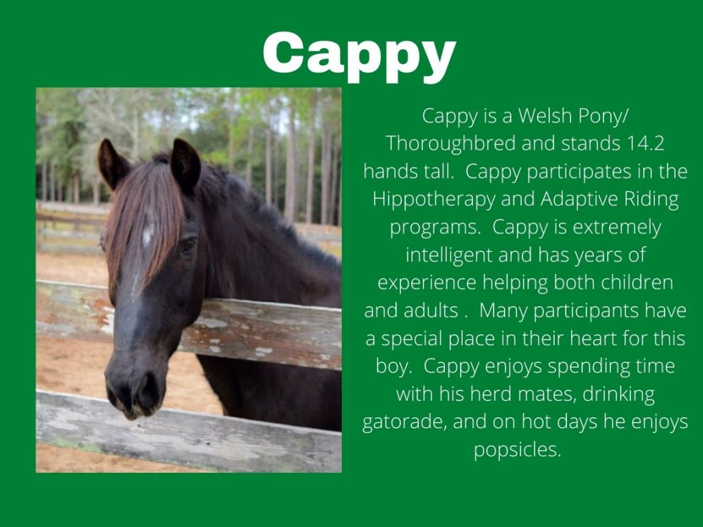 Cappy - Photo and Bio