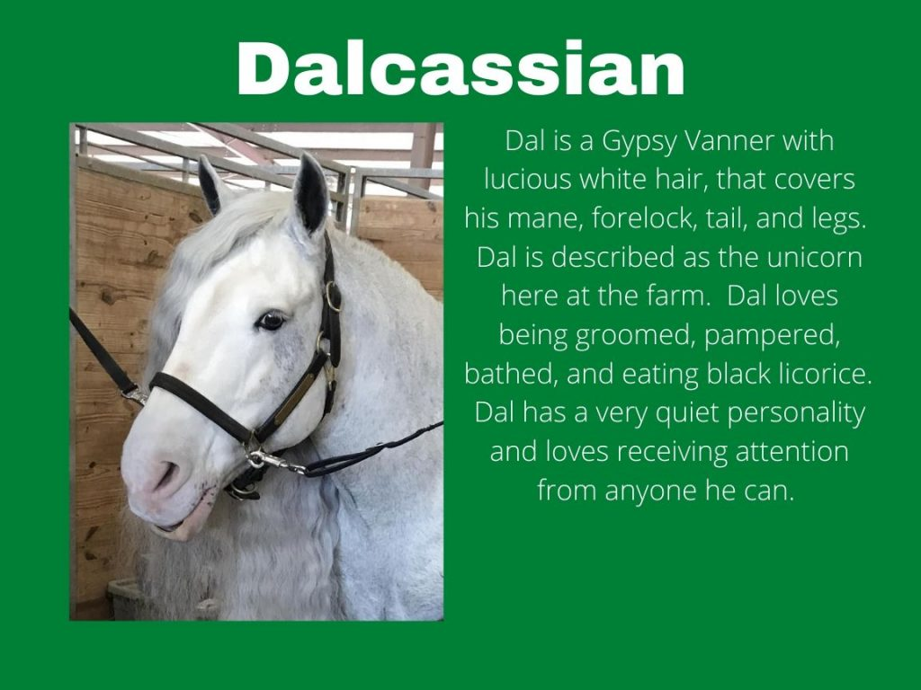 Dalcassian - Photo and Bio