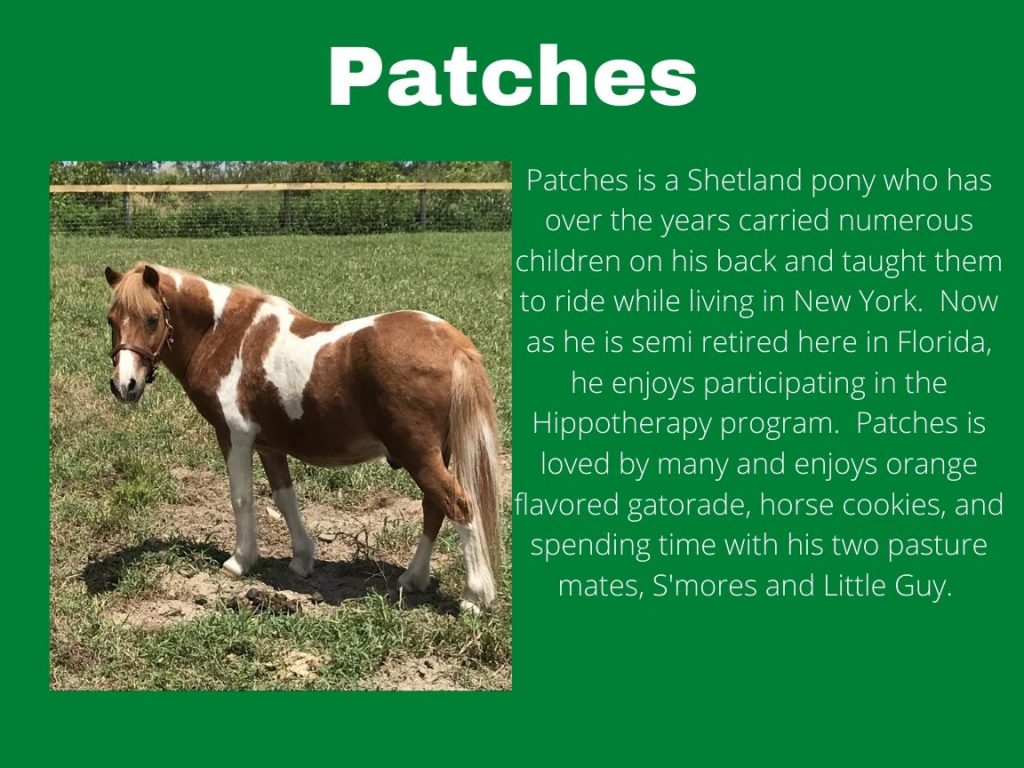 Patches - Photo and Bio