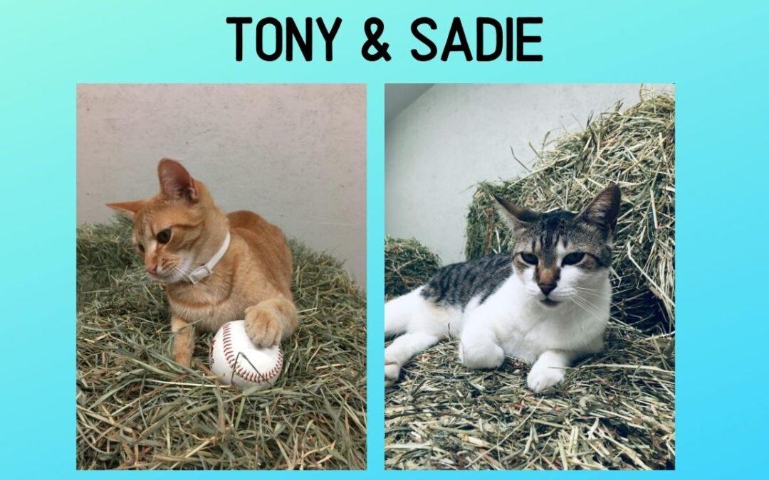 Tony & Sadie